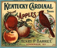 So many beautiful fruit labels long ago . . . reflect exactly what viable local orchards can achieve once more.