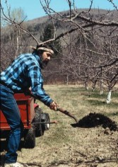 Spreading compost in Lost Nation Orchard. Photo by Michael Phillips.
