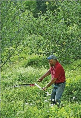 Simple acts like mowing have biological ramifications: The first flush of tree feeder root growth begins just as grass gets scythed down following apple bloom. -- photo: Frank Siteman