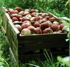 Good fruit grown with intimate care nourishes local economy as well as our health. Photo by Michael Phillips.