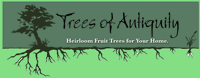 Trees of Antiquity logo